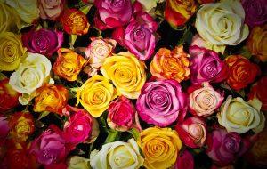 W jaki sposób zaopatrzyć się w świeże kwiaty na konkretną okazje?